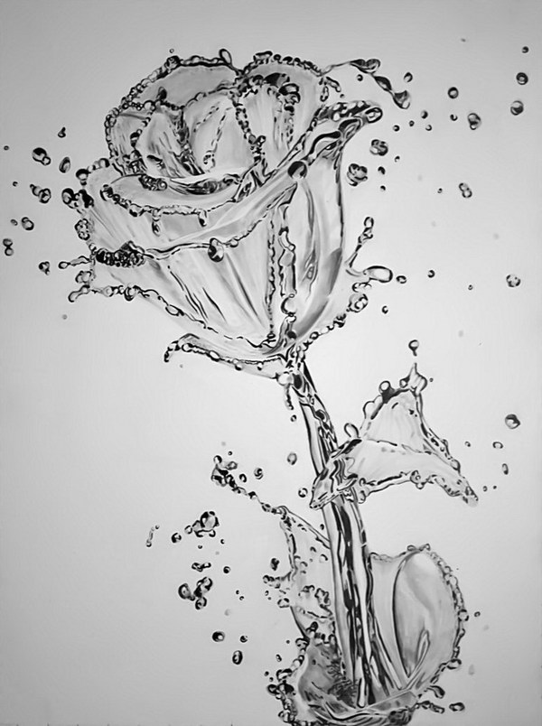 pencil drawing water flower
