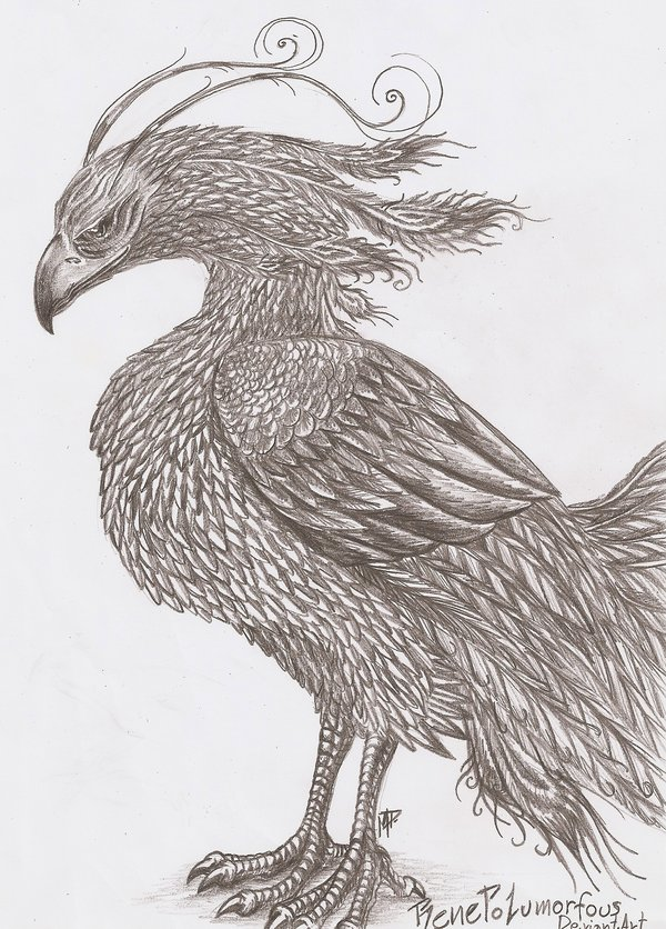 pencil drawings of phoenix