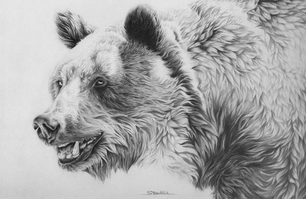 Panda Bear  bearlifeorg