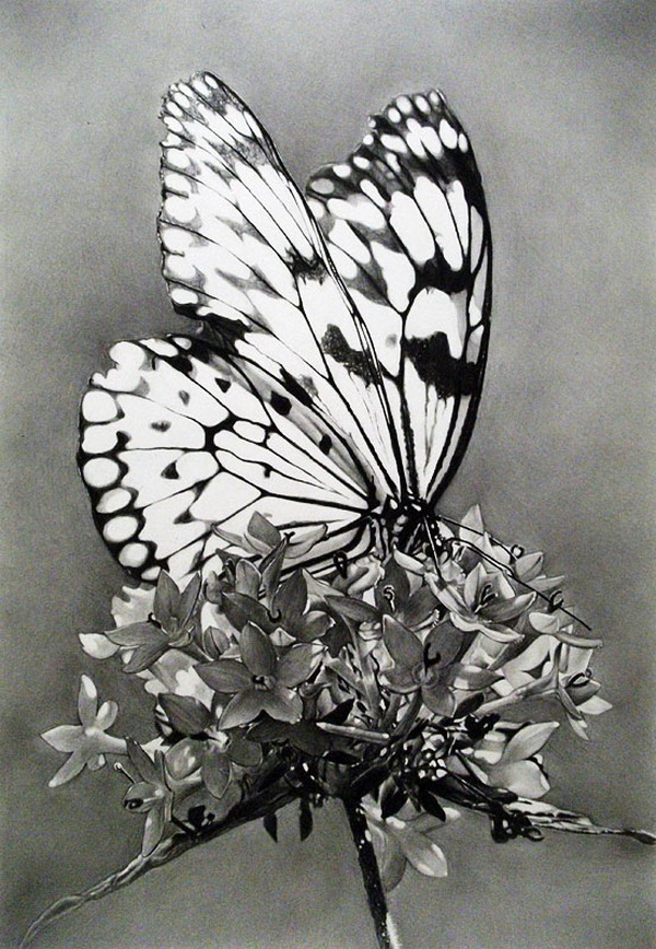 10+ Beautiful Butterfly Drawings for Inspiration - Hative