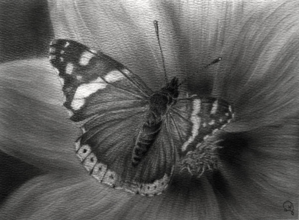 butterfly drawing 8