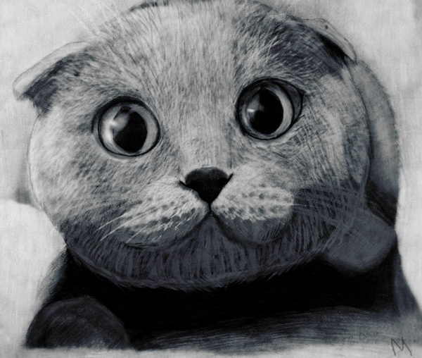Dogs And Cats Drawings Cute