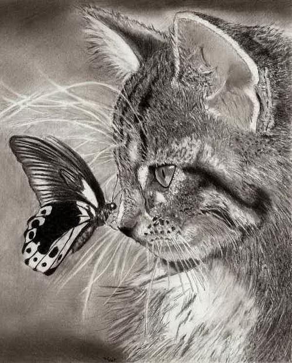 10 Cute Cat Drawings Showcase - Hative