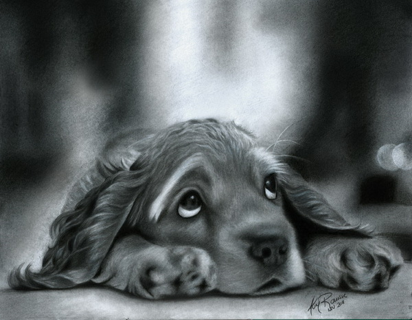 10 Lovely Dog Drawings For Inspiration Hative