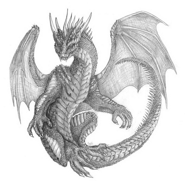 1000+ images about DRAGON drawing on Pinterest | Dragon ...