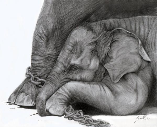 Elephant Drawing Elephant Drawing 1