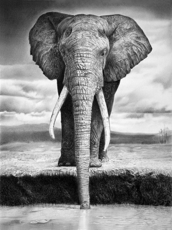 10+ Excellent Elephant Drawings for Inspiration - Hative Realistic Elephant Drawing