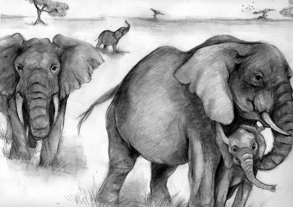 10 Excellent Elephant Drawings For Inspiration Hative