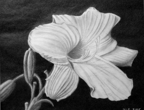 flower drawing 7