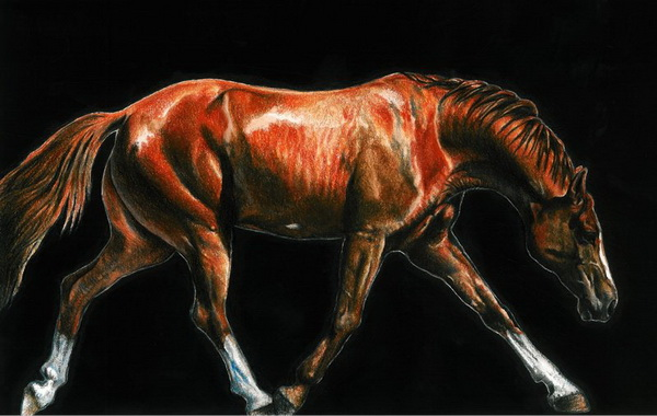 horse drawing 10