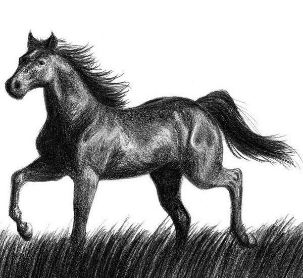 Cool sketches of horses