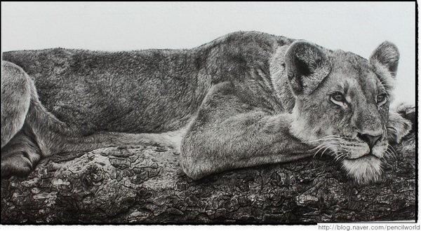 10  cool lion drawings for inspiration