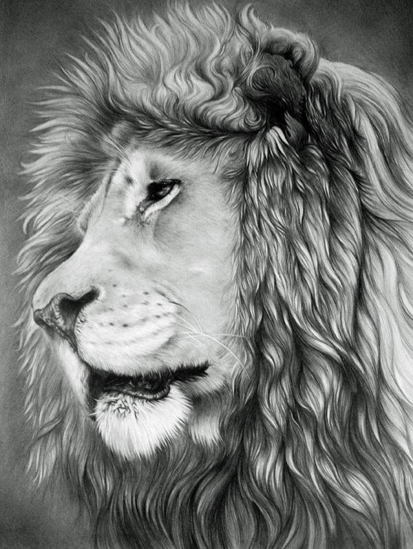 10+ Cool Lion Drawings for Inspiration - Hative