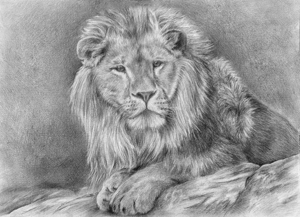 how to draw a cool lion
