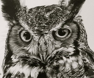 owl-drawing-thumbnail