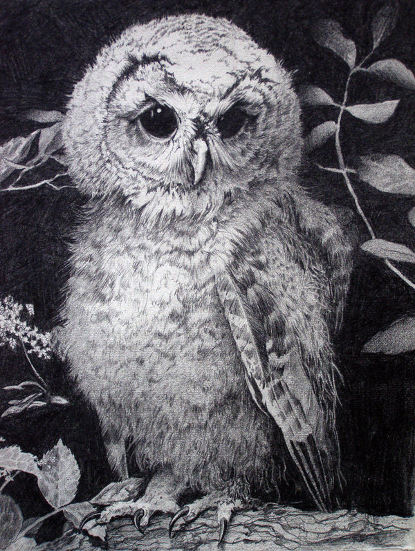 10+ Clever Owl Drawings for Inspiration - Hative