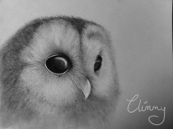 cute owl drawings - 600×448
