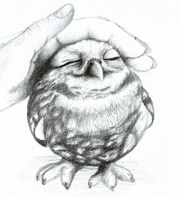 Drawings owl drawing inspiration inspirational drawing for Draw the owl