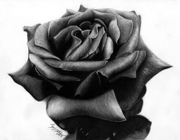 10+ Beautiful Rose Drawings for Inspiration - Hative