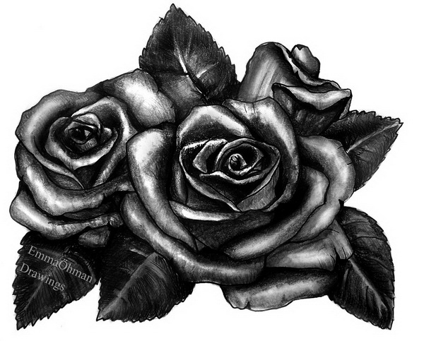 10 Beautiful Rose Drawings For Inspiration Hative