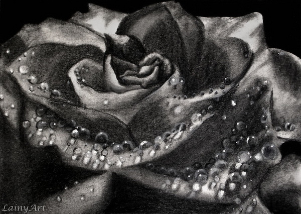 rose drawing 5
