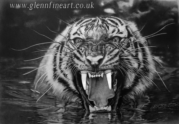 10 cool tiger drawings for inspiration hative