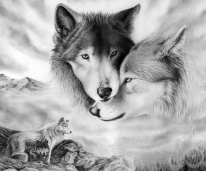 wolf-drawing-thumbnail