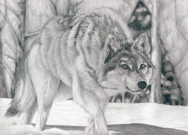 Esperetta's Room Wolf-drawing-10