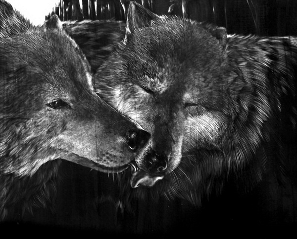 Cool wolf drawings in pencil