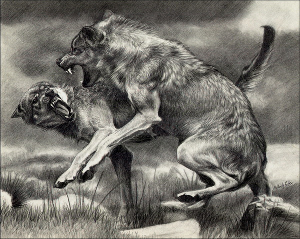 10+ Cool Wolf Drawings...