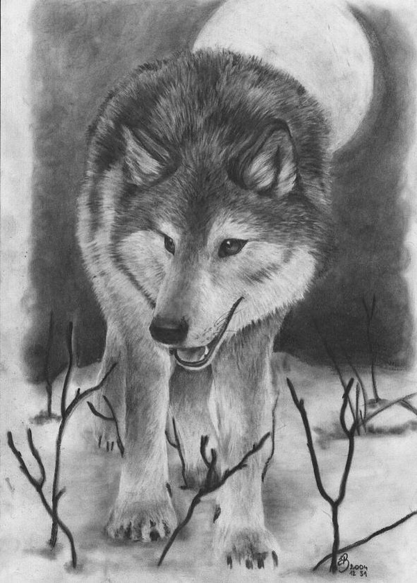 10 Cool Wolf Drawings For Inspiration