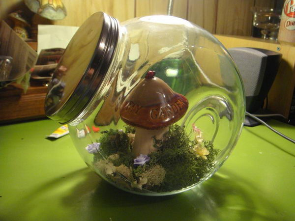 terrarium for faeries 30