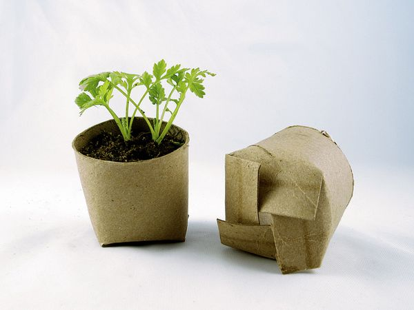 44-tiny-pots-for-seedlings
