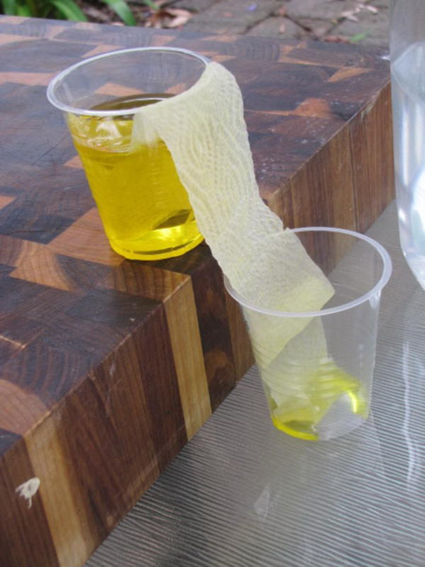 20 Cool Science Project Ideas For Kids Hative
