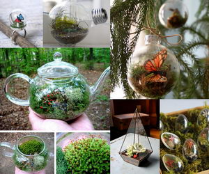 terrarium-containers-collage