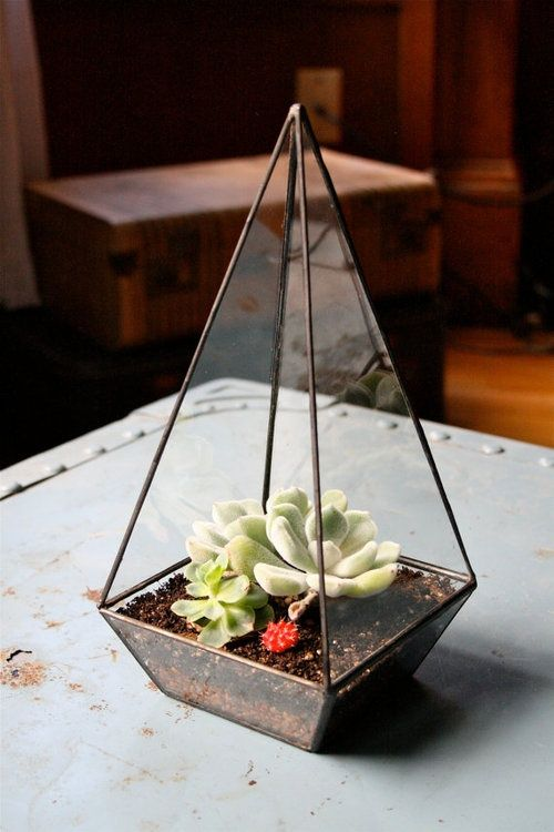 Creative terrarium containers hative
