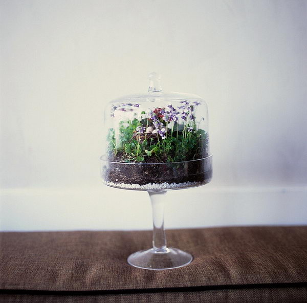 Wedding Cake Stand Ideas: 20 Creative Terrarium Containers