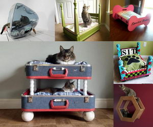 cool-pet-bed-ideas-collage