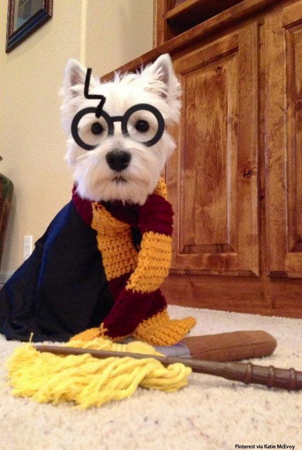 20 Cool Pet Costumes For Halloween Hative