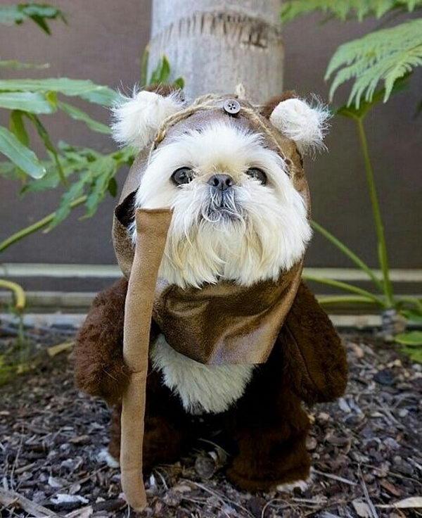 Wedding Dress: 20 Cool Pet Costumes For Halloween