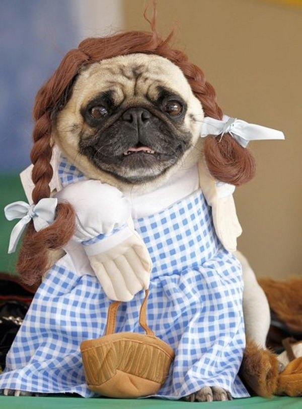 20 Cool Pet Costumes For Halloween
