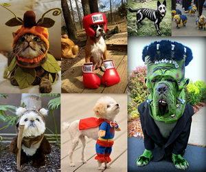 pet-costumes-collage