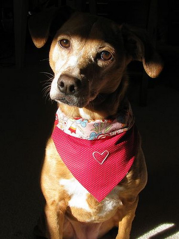 Cool Diy Dog Collars Hative