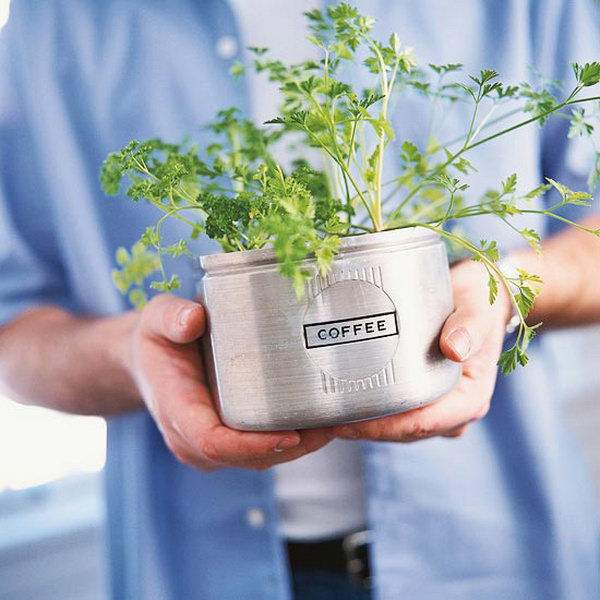 Indoor herb garden from kitchen canisters.
