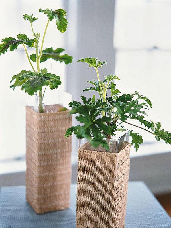 Indoor garden from rattan wrapped vases.