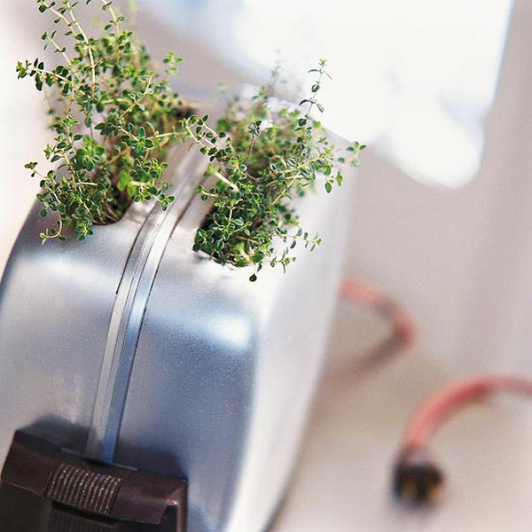 Toaster indoor garden.