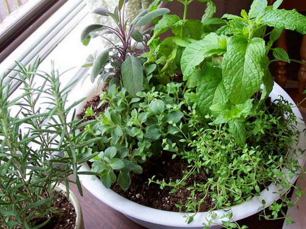 Make a one pot indoor herb garden.