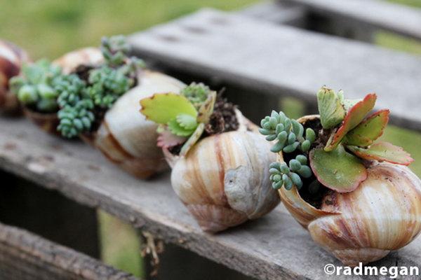 Snail shells garden.