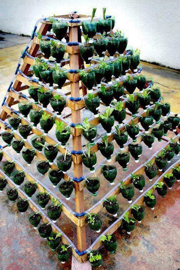 Vertical Vegetable Garden From Plastic Bottles. It Allows Plants To Extend  Upward Rather Than Grow