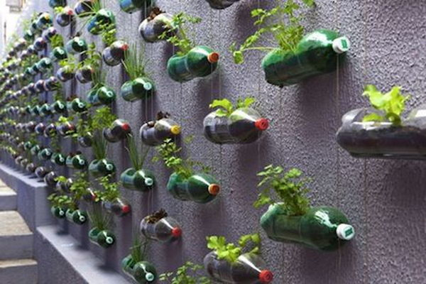 Vertical Garden With Recycled Pet Bottles. It Allows Plants To Extend  Upward Rather Than Grow